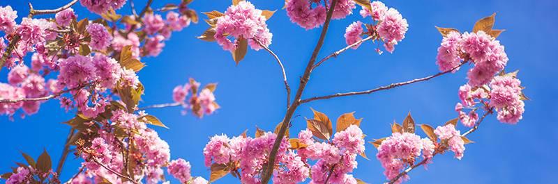 Blossom Place – Activity Calendar – August