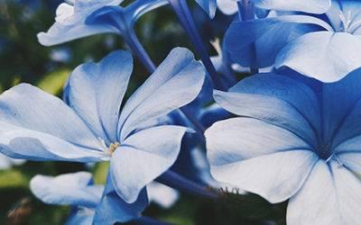 Blossom Place – Activity Calendar – December