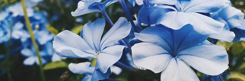 Garden House – Activity Calendar – March